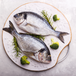foods rich in albumin fish