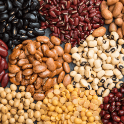 legumes 11 foods rich in albumin